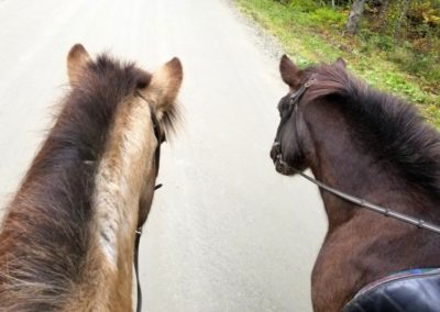 Horse Riding | Vermont Icelandic Horse Farm & Vacation Rental in Waitsfield