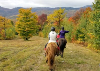 On the Trail | Vermont Icelandic Horse Farm & Vacation Rental in Waitsfield