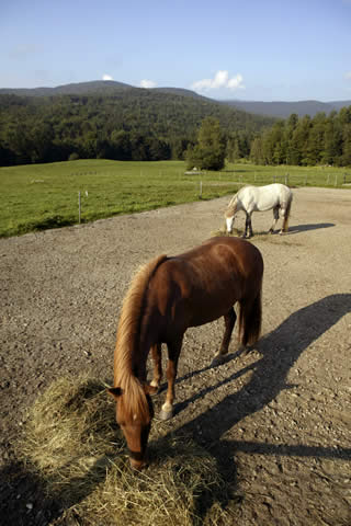Brown Horse | Vermont Horse Farm & Vacation Rental in Fayston, Vermont
