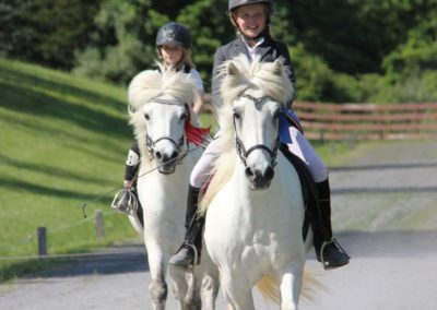 Vermont Icelandic Horse Farm & Vacation Rental in Waitsfield
