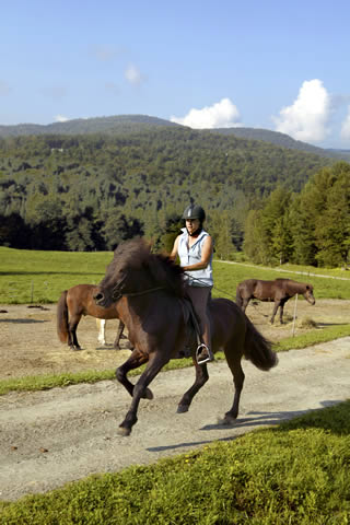 Karen Giving Loki A Workout | Vermont Icelandic Horse Farm & Vacation Rental in Waitsfield