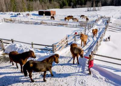 Sales | Vermont Horse Farm & Vacation Rental in Fayston, Vermont