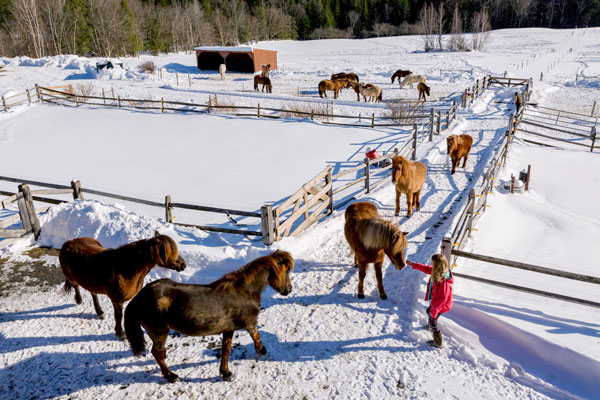 Sales | Vermont Icelandic Horse Farm & Lodging in Waitsfield