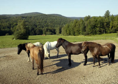 Horses | Vermont Horse Farm & Vacation Rental in Fayston, Vermont