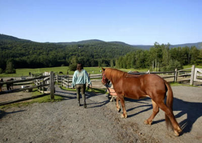 Horse Farm | Vermont Horse Farm & Vacation Rental in Fayston, Vermont