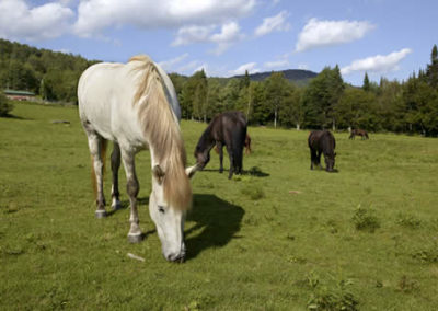 Horse | Vermont Horse Farm & Vacation Rental in Fayston, Vermont