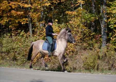 Moska | Vermont Icelandic Horse Farm & Vacation Rental in Waitsfield