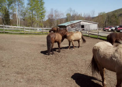Horse Farm | Vermont Icelandic Horse Farm & Lodging in Waitsfield