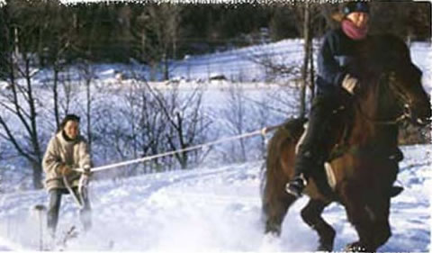 Skjioring | Vermont Icelandic Horse Farm & Vacation Rental in Waitsfield