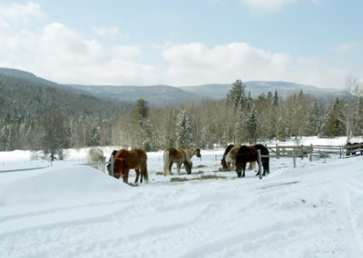 Winter | Vermont Horse Farm & Vacation Rental in Fayston, Vermont
