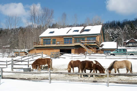 Vermont Horse Farm | Vermont Icelandic Horse Farm & Lodging in Waitsfield
