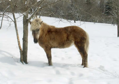 Winter Horse | Vermont Horse Farm & Vacation Rental in Fayston, Vermont