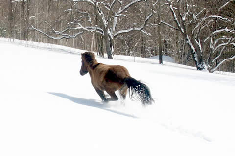 History | Vermont Icelandic Horse Farm & Lodging in Waitsfield